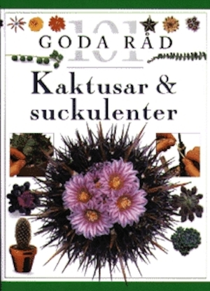Kaktusar & suckulenter